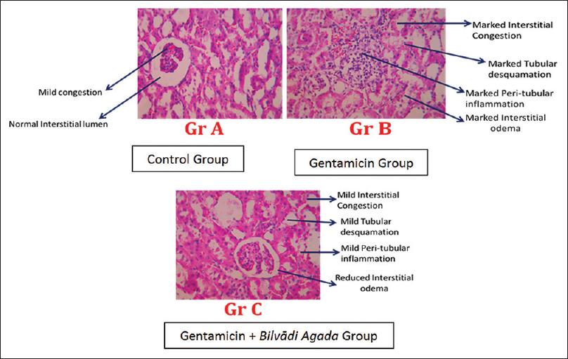 Figure 1: Histopathological slides of Kidney of animals in each group
