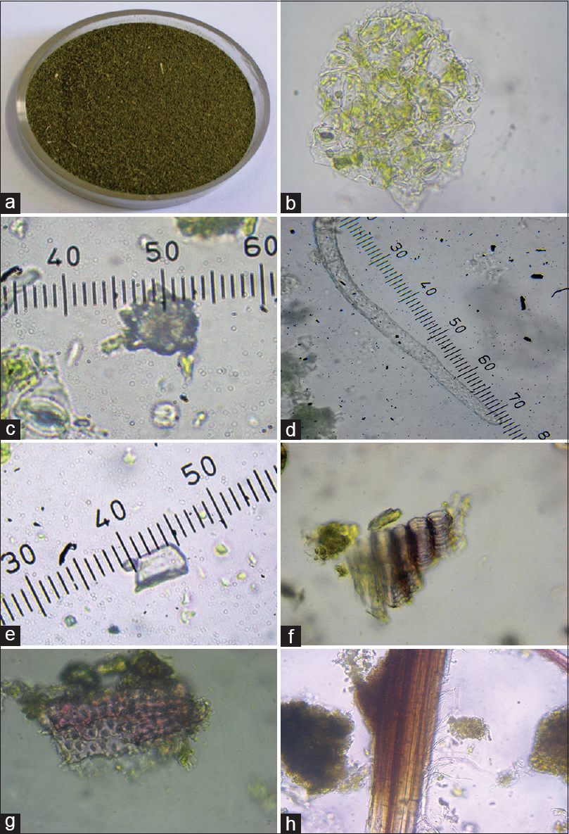 Figure 3: (a) Leaf powder, (b) epidermal cell with stomata, (c) cluster crystal, (d) multicellular warty trichomes, (e) prismatic crystal, (f) annular vessels, (g) border pitted vessels, (h) lignified fibres